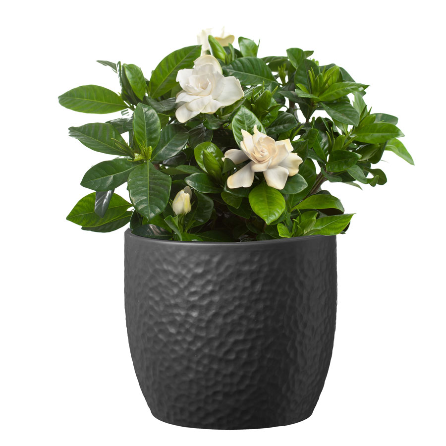 Gardenia In Ceramic