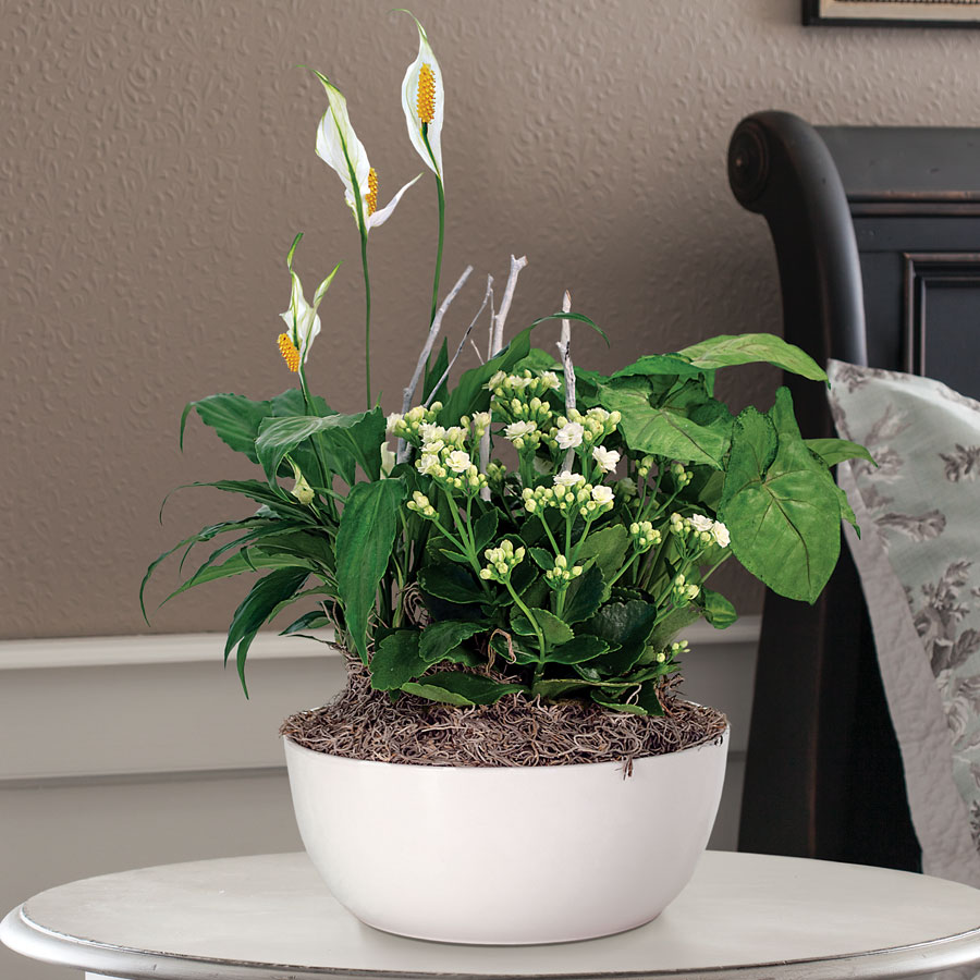 Peace lily kalanchoe arrowhead plant mix in white container mixed garden gift in white container mightylinksfo