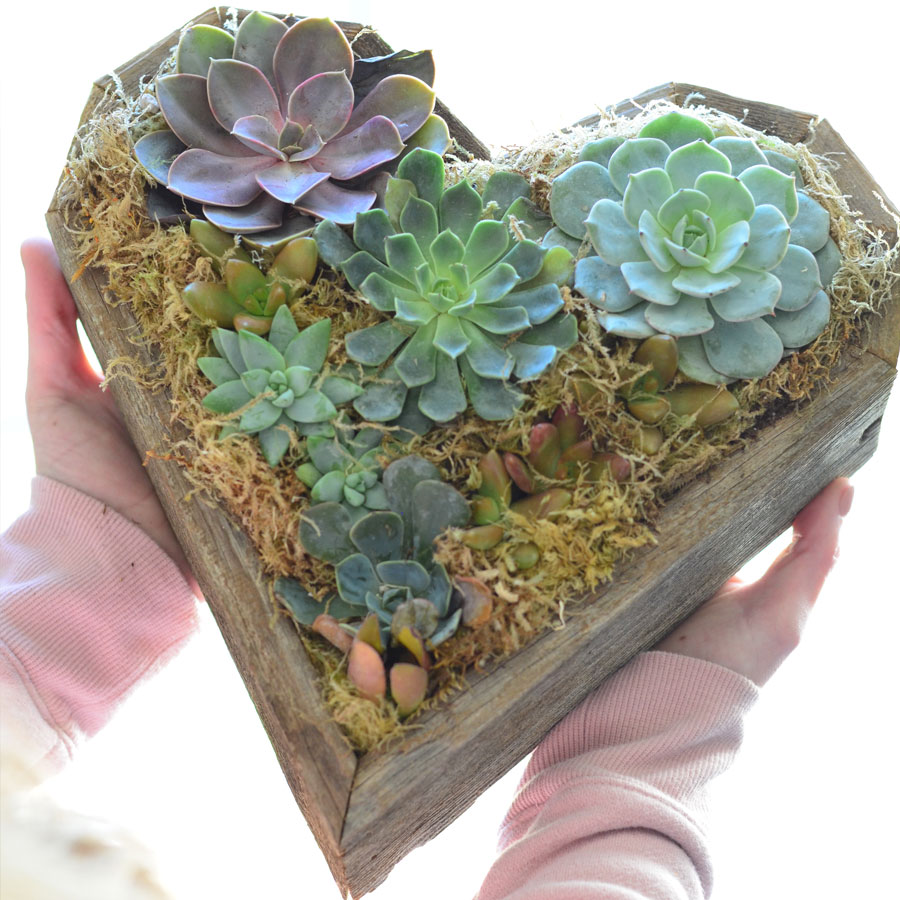 Heart Mix Succulent Garden Image