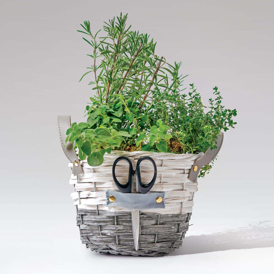Herb Trio Gift Image