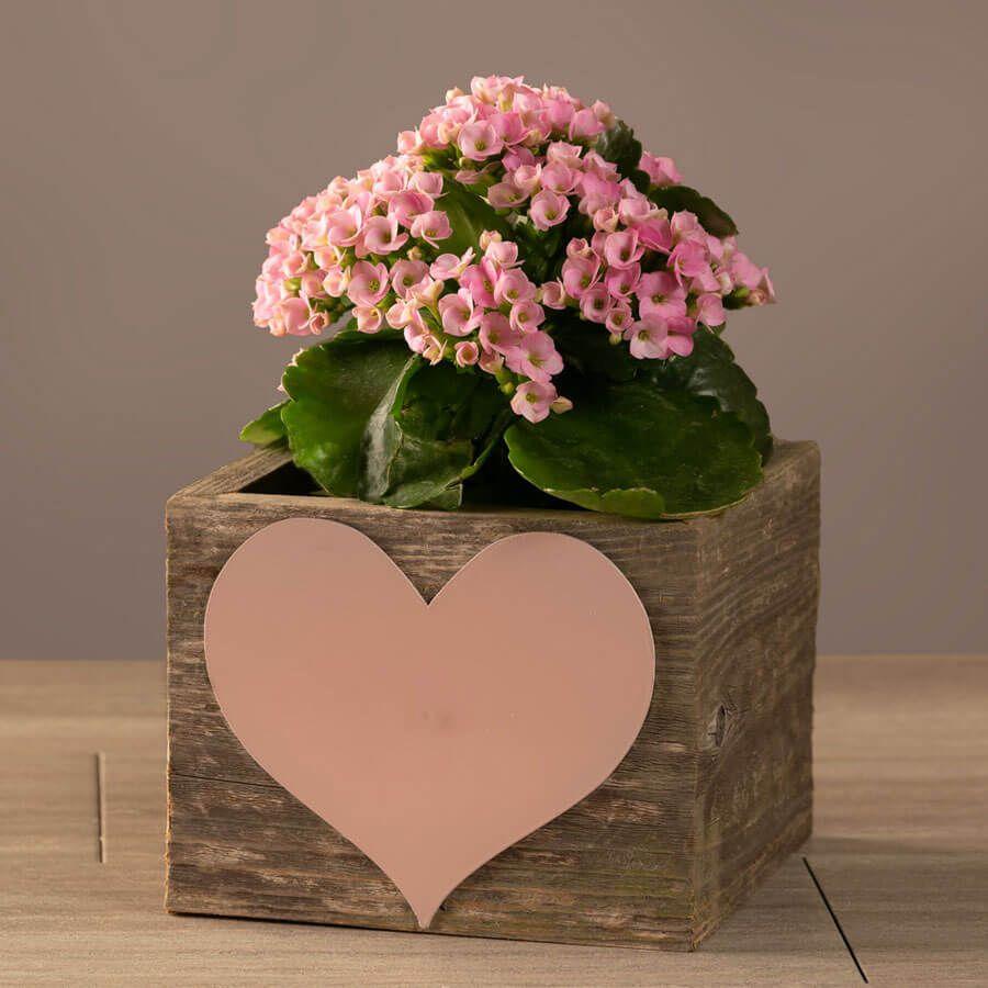 Pretty Pink Kalanchoe Gift Image