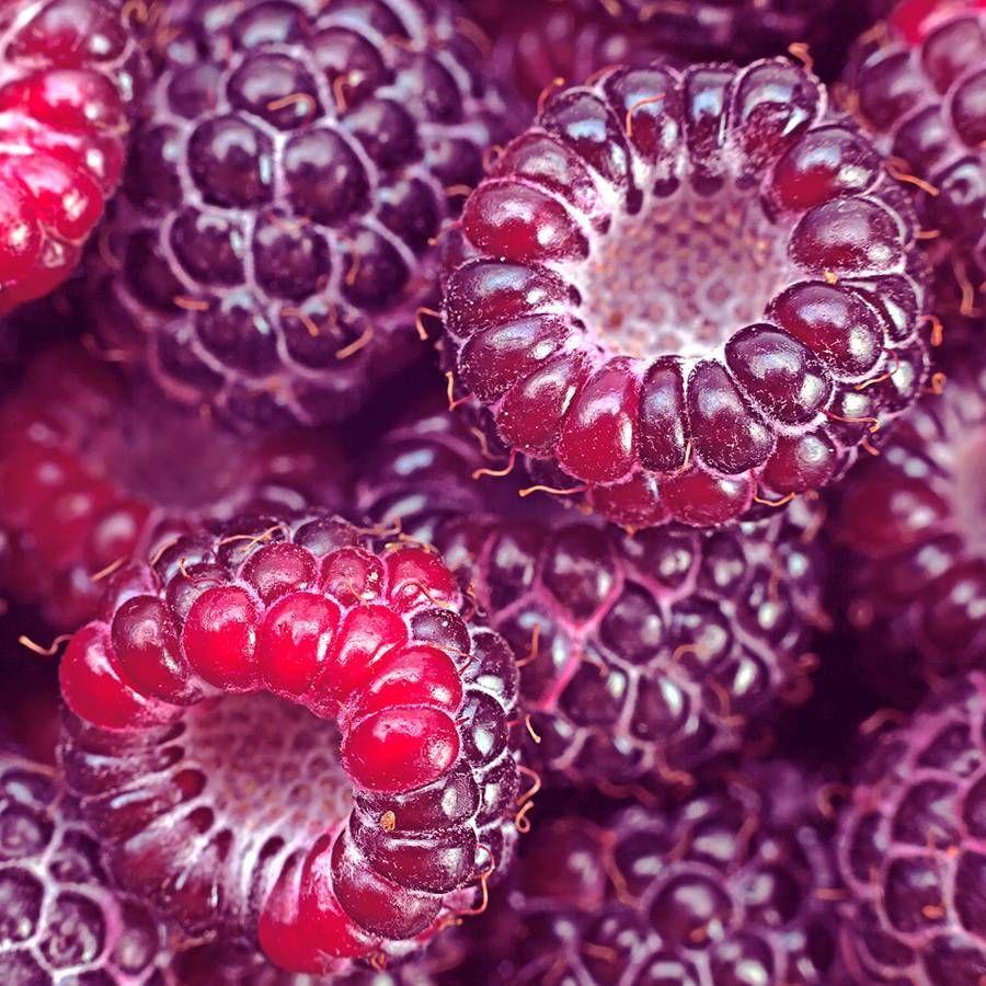 Raspberry 'Royalty' Image