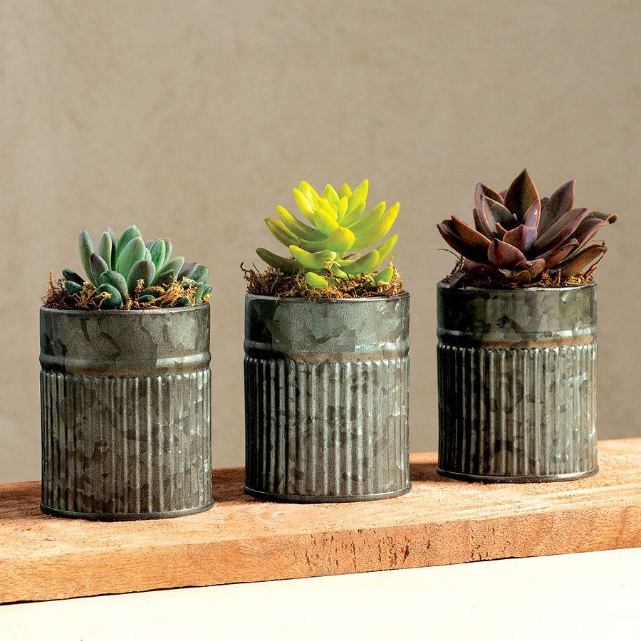 3 Succulent Tins Image