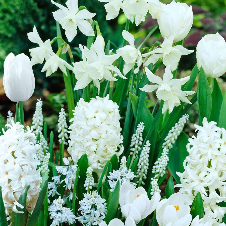 White Garden Collection Image