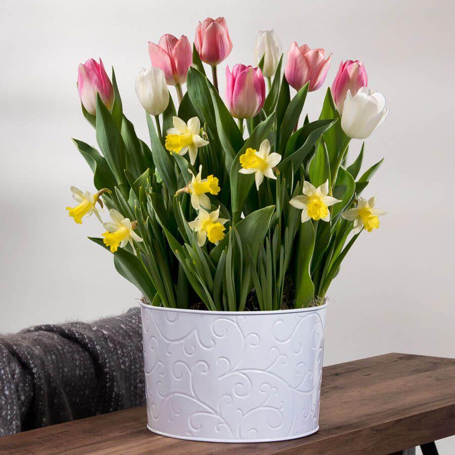 Cheerful Day Bulb Garden Image