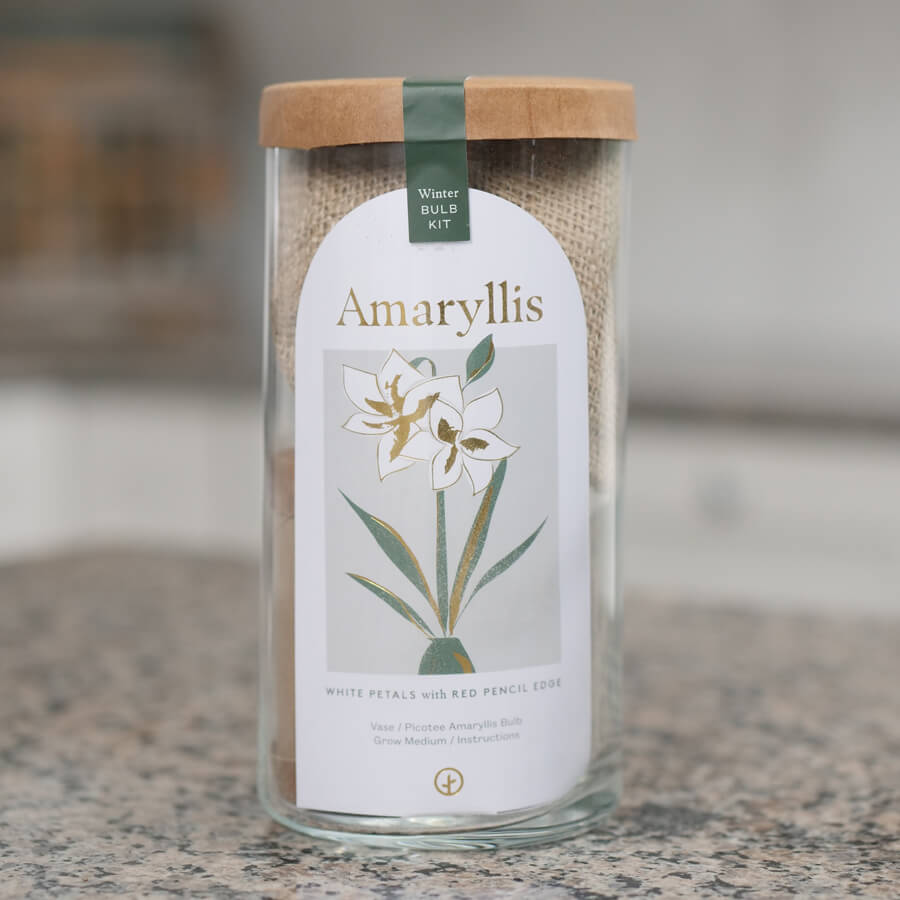Amaryllis Bulb Kit Image