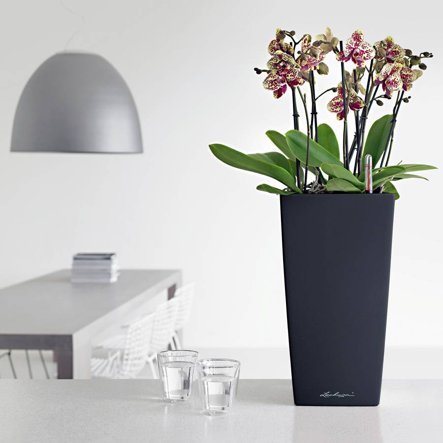 Lechuza black all in one cubico self watering planter - Lechuza self watering planter ...