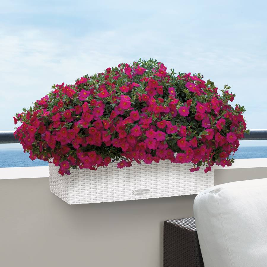 Lechuza white all in one balconera cottage self watering planter - Lechuza self watering planter ...