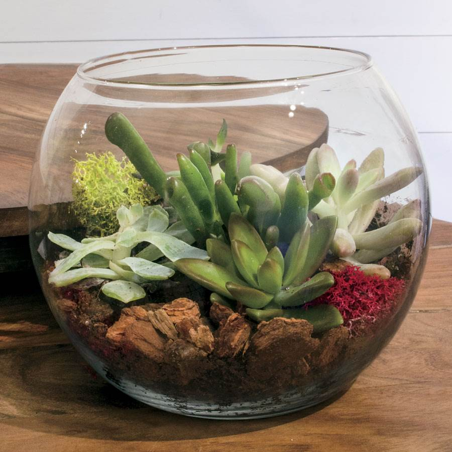 Succulent Terrarium Bowl - Succulent Terrarium Bowl At Jackson And Perkins