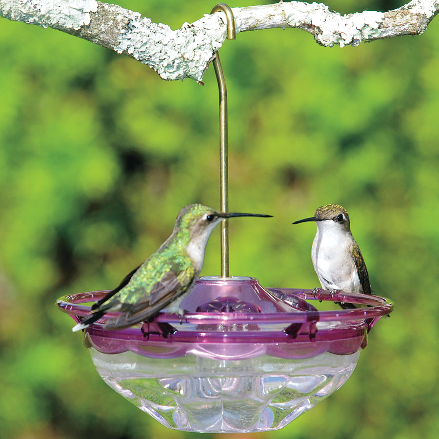 humingbird shop hummingbird whimsical base feeder clear