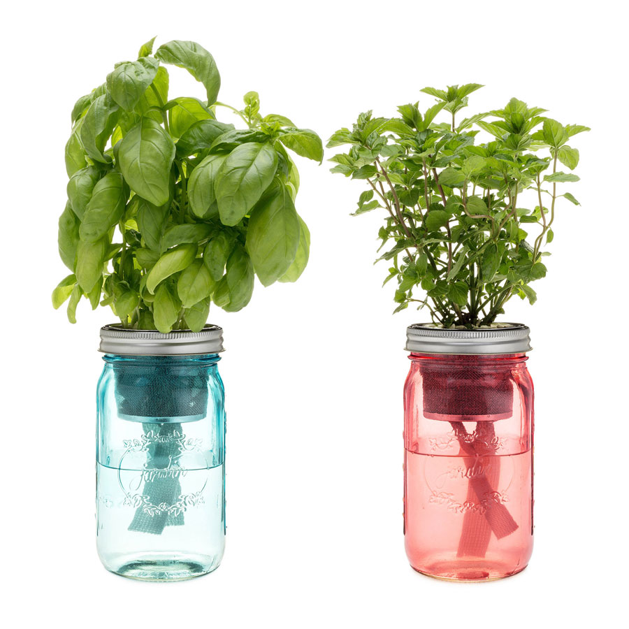 Modern Sprout Cocktail Herbs Garden Jar - 2PK