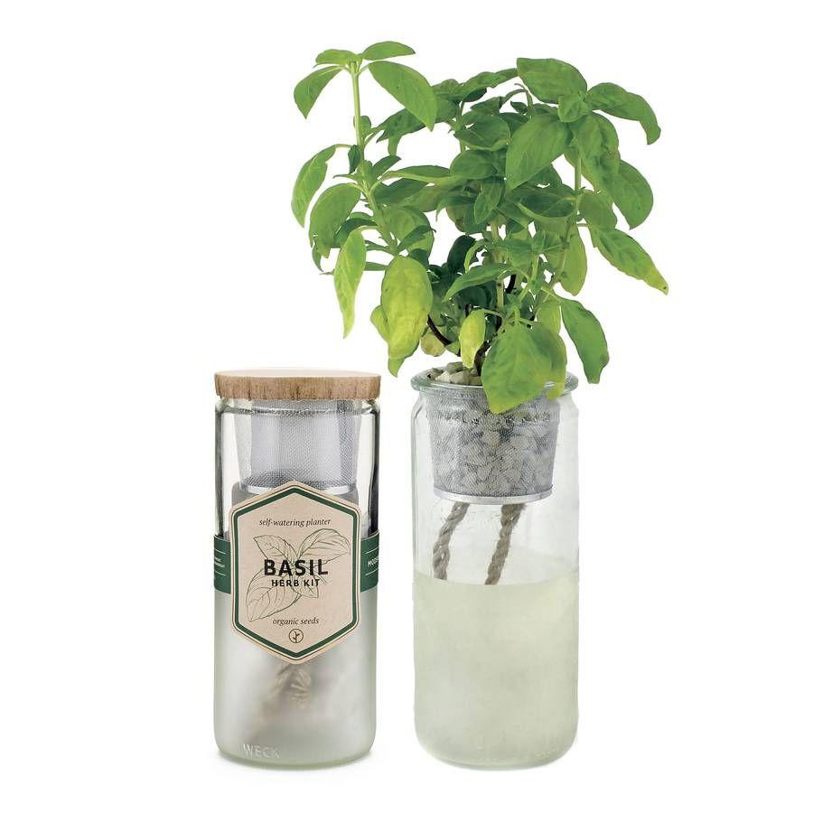 Eco Planter Basil