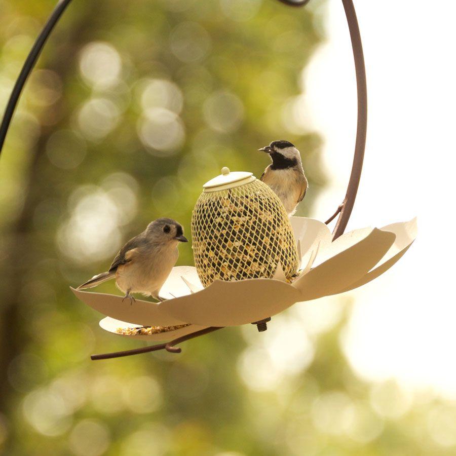 com dp bird and green amazon no yellow pet perky original sunflower basket feeder