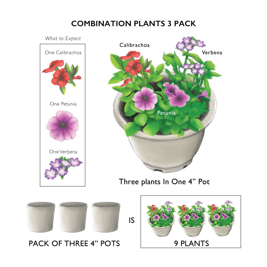 Cotton Tail Combination (pack of 3)