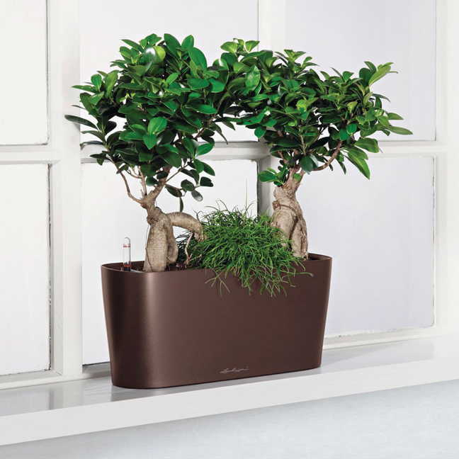 Self Watering Indoor Planters Part - 30: Jackson U0026 Perkins