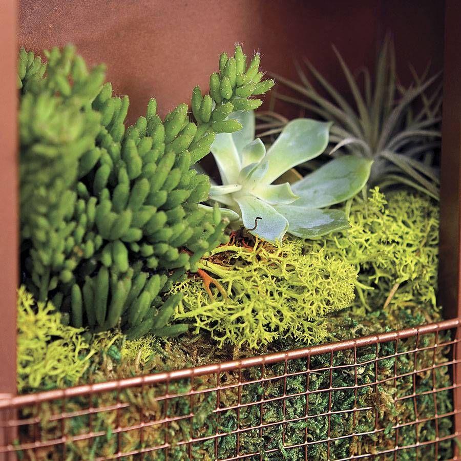 Succulent Plant Portraits