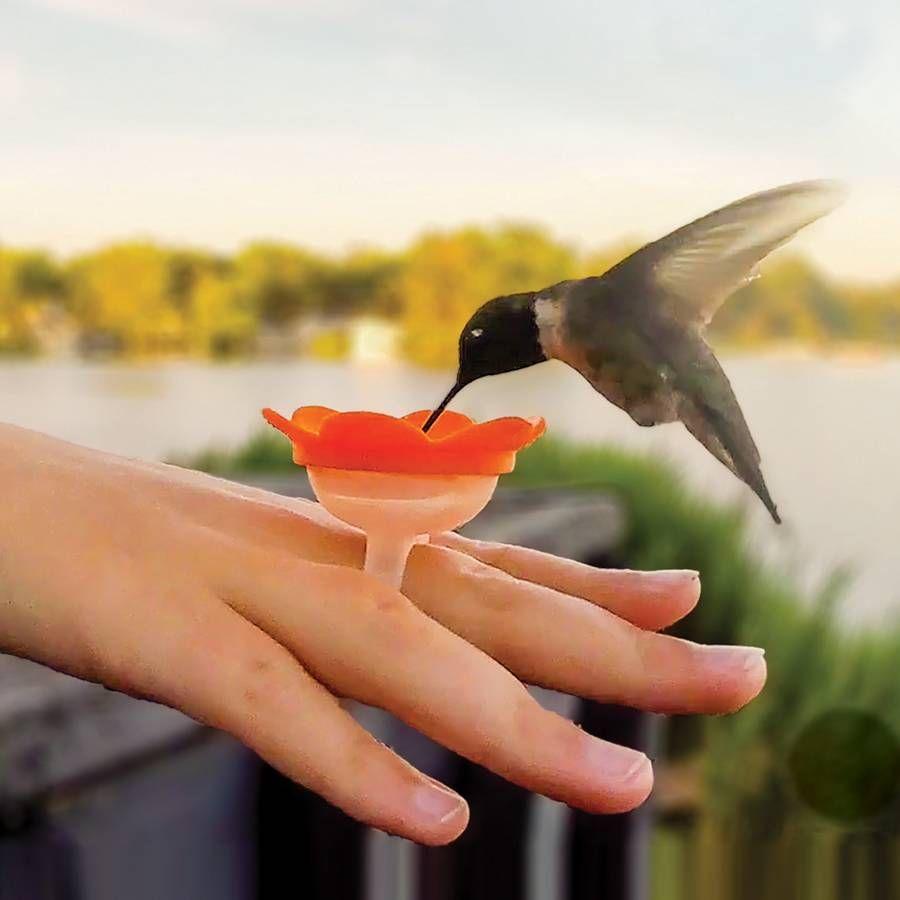 Hummingbird Ring Feeders Image