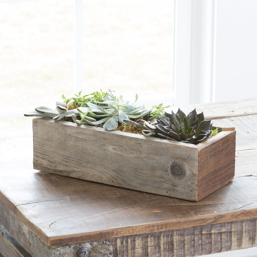 Succulent Garden Trough