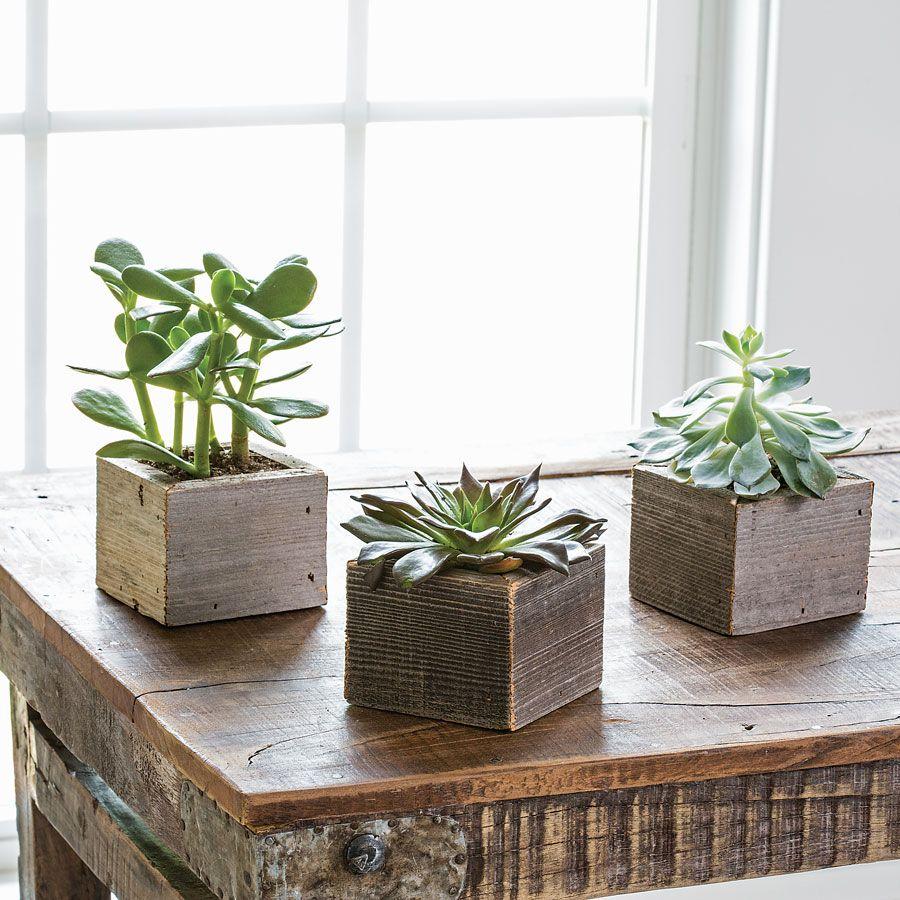 Succulent Cubes