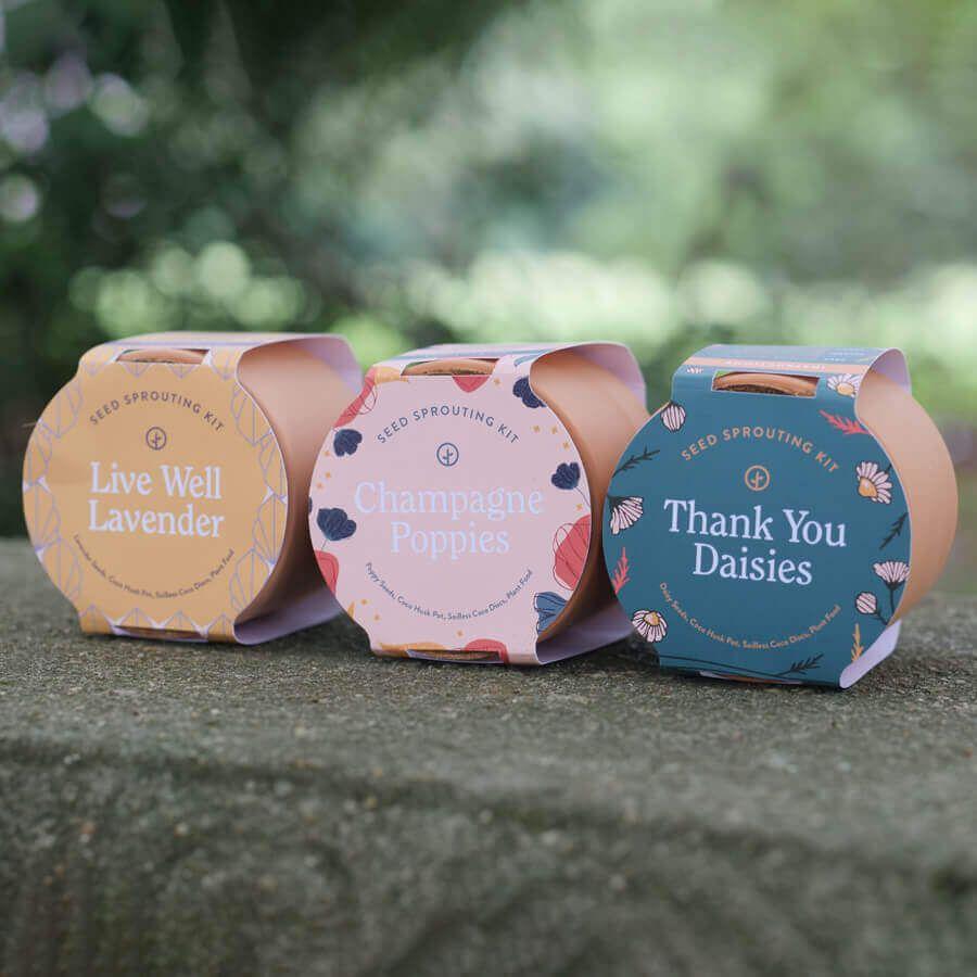 Tiny Terracotta Flowering Kits Image